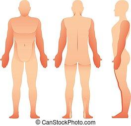 dos, humain, homme, vecteur, devant, vue., corps, silhouettes, côté