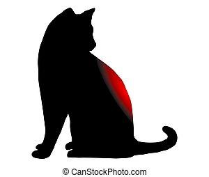 douleur dorsale, chat