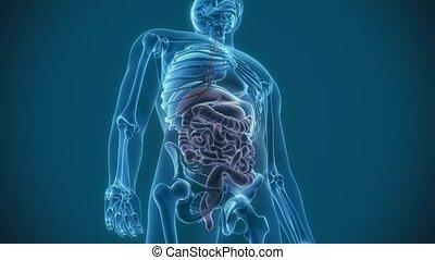 douleur, organes