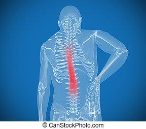 douleur, sien, avoir, numérique, dos, transparent, squelette