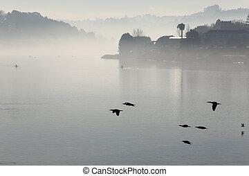 douro, brume, rivière, matin