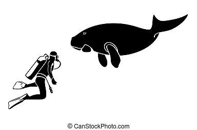 dugong, plongeur sous-marine