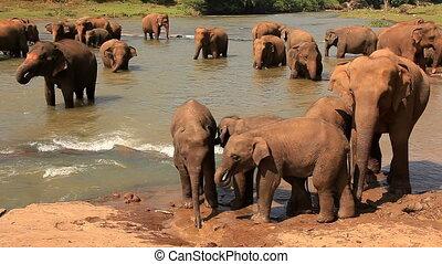 eau, boisson, rivière, éléphants