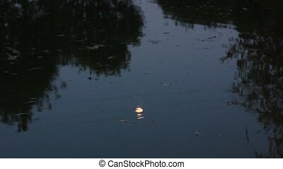 eau, calme, lac, surface, nuit