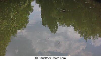 eau, calme, surface, lac