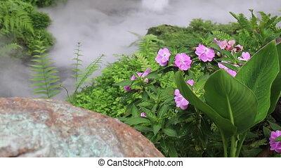 eau, exotique, jardin, vapeur, dehors