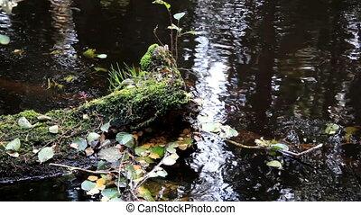 eau, feuilles, flotter