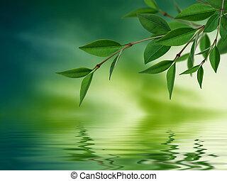 eau, feuilles, refléter