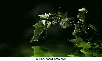 eau, feuilles, vert, sur, incandescent