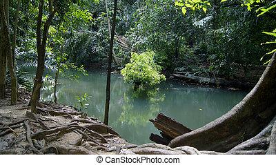 eau, forêt, vert