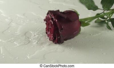 eau, lent, rose, métrage, mouvement, vidéo, fond, tomber, blanc rouge, stockage