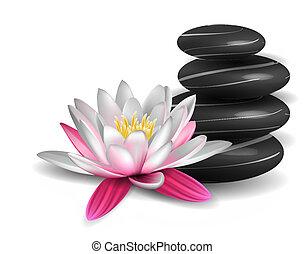 eau, pierres, lis, zen