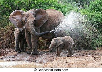 eau, pulvérisation, éléphant