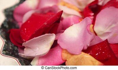 eau, roses, gouttes, couvert, pétales