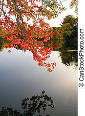 eau, sur, feuillage, coloré, automne