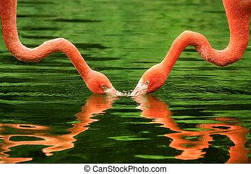 eau, symmetrically, flamants rose, reflété