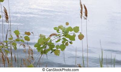 eau, tremble, fond, branche