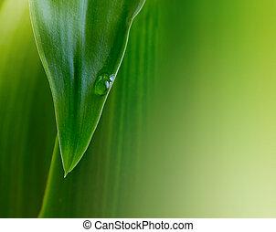 eau, vert, goutte, feuille