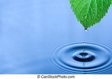 eau, vert, gouttes, feuille
