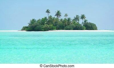 eaux, clair, cristal, maldives, île tropicale, chaud, paradis