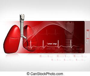 ecg, humain, poumons