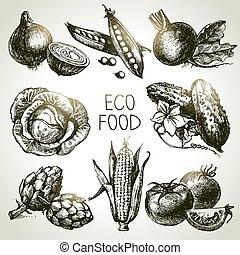 eco, foods., légume, set., illustration, vecteur, croquis, main, dessiné