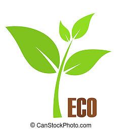 eco, plante