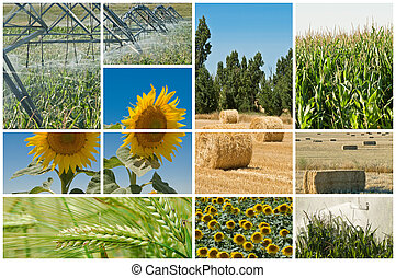 ecology., agriculture
