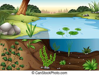 ecosytem, étang