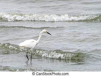 egret, debout, grand, plage
