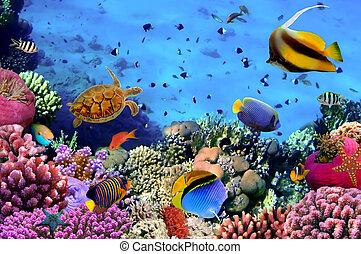 egypte, photo, corail, colonie, récif