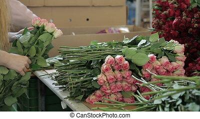 employé, rose, femme, table, roses, fleur, farm., mettre