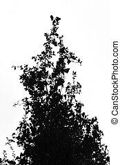 enchevêtré, plante, branches, arbrisseau, lierre
