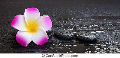 encore, spa, vie, plumeria, fleur