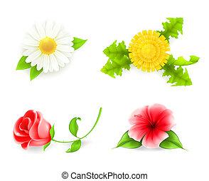 ensemble, 10eps, fleurs