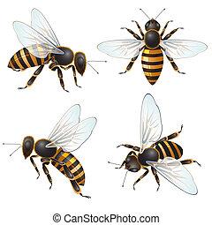 ensemble, abeille