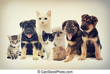 ensemble, animaux familiers