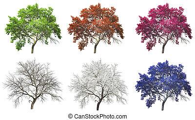 ensemble, arbre, isolé, quatre, fond, saisons, blanc