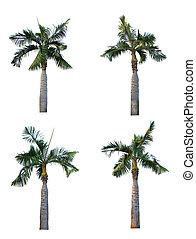ensemble, arbre, isolé, quatre, paume, fond, blanc