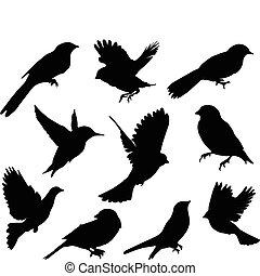 ensemble, birds., vecteur