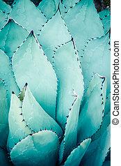 ensemble., bunched, feuilles, pointu, agave, dièse, plante