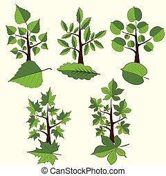 ensemble, feuille, agrafe, arbres., arbre, à feuilles caduques, vecteur, art.