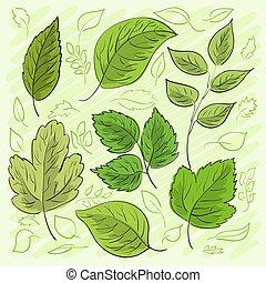 ensemble, feuilles, hand-drawn, vecteur, vert, ton, design.