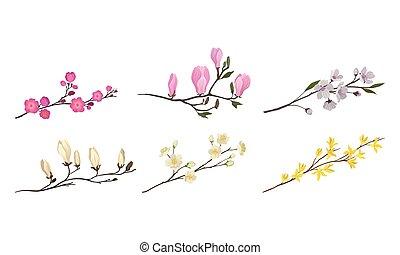 ensemble, fleurir, bourgeons, tendre, branches, arbre, brindilles, vecteur, fleur