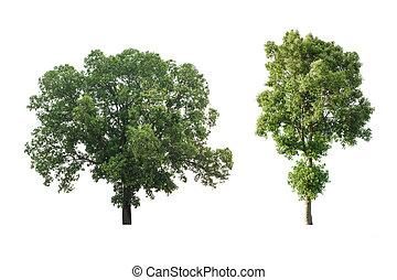 ensemble, grand arbre, isolé, arrière-plan., blanc