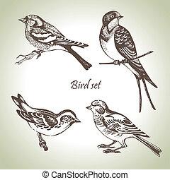 ensemble, hand-drawn, oiseau, illustration
