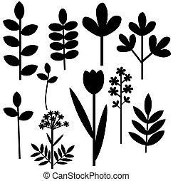 ensemble, herbier, résumé
