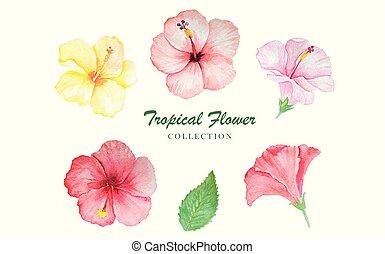 ensemble, illustration, aquarelle, vecteur, floral, ton, design.