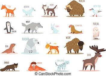 ensemble, leopard., conception, antarctique, lynx, manchots, neige, hibou, bœuf, cerf, zibeline, éléphant, musc, plat, morse, sterne, arctique, animals., cachet, lapin, husky, renard, vecteur, ours, loup