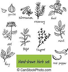 ensemble, main, herbes, vecteur, fond, dessiné, épices